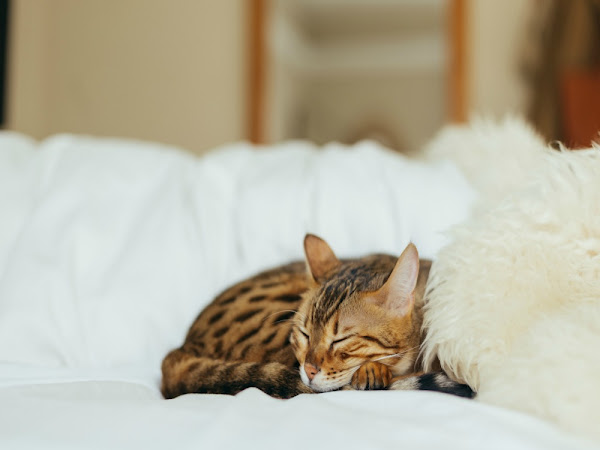 Should Pets Be Allowed In Your Bedroom?