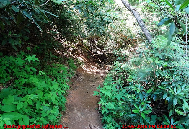Trail to Helton Creek Falls
