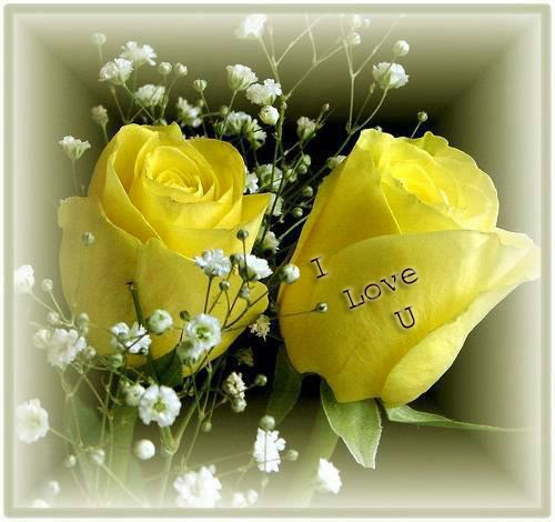 i love u with yellow rose