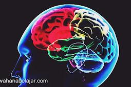 Mengenal Bagian-Bagian Terpenting Otak