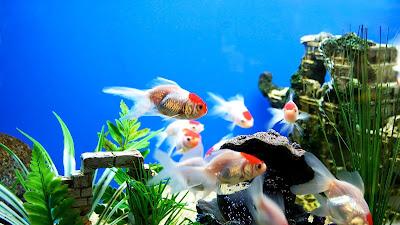 Best Aquarium HD Wallpaper