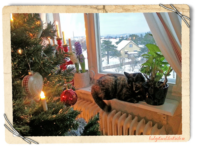 cat in window, christmas tree, christmas