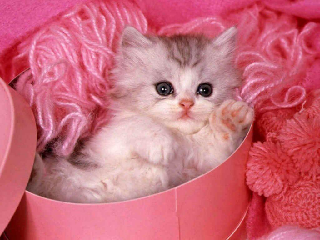 Cute Little Kitten Desktop Wallpapers Hd Widescreen Backgrounds Wallpapers Animal Free