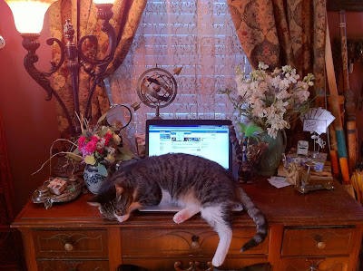 Cat on Computer - Stein Your Florist Co.