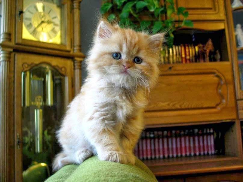 bayi kucing kecil yang lucu
