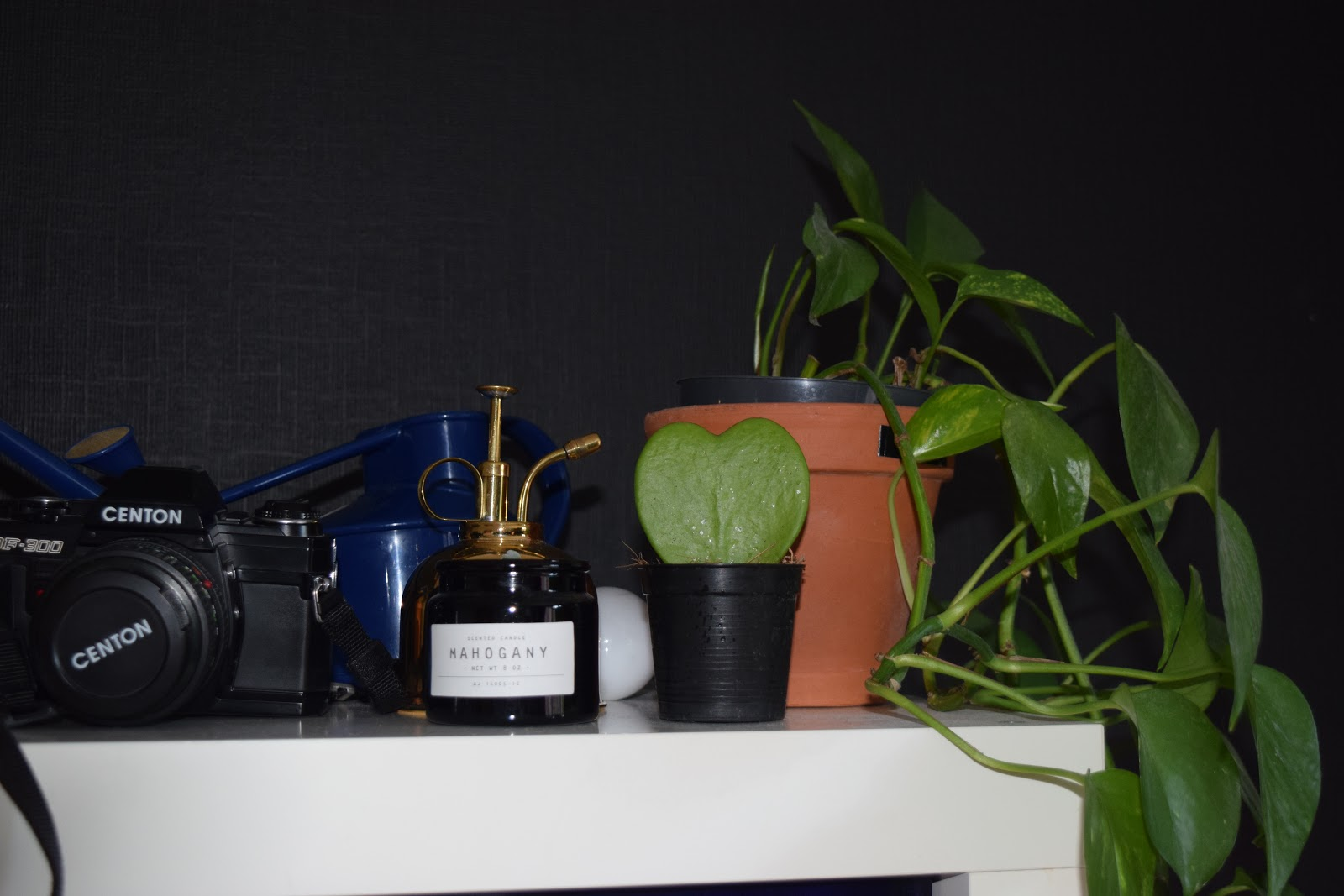 shelf with plants, vintage camera, watering can and plant mister