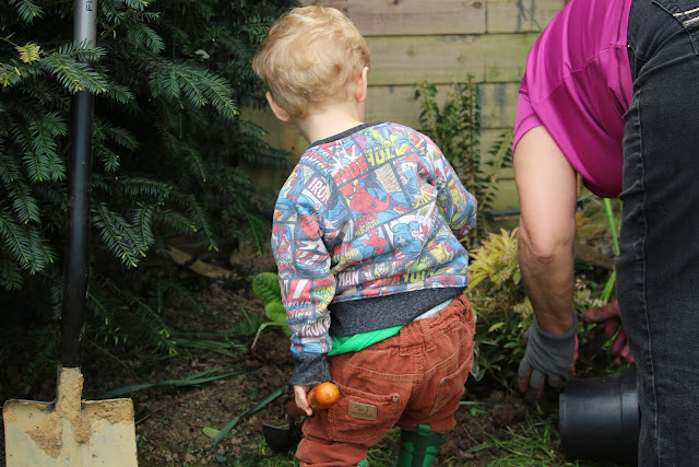 Planting with nanny - Erect Ivy (Hedera helix )