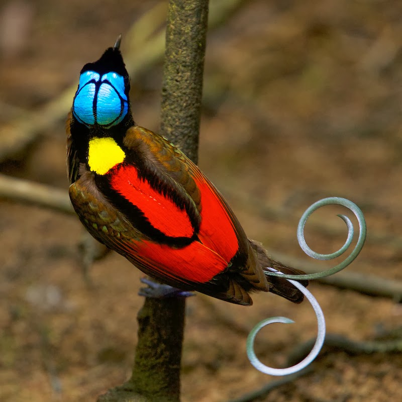 Life and Entertainment: Spectacular Bird of Paradise....