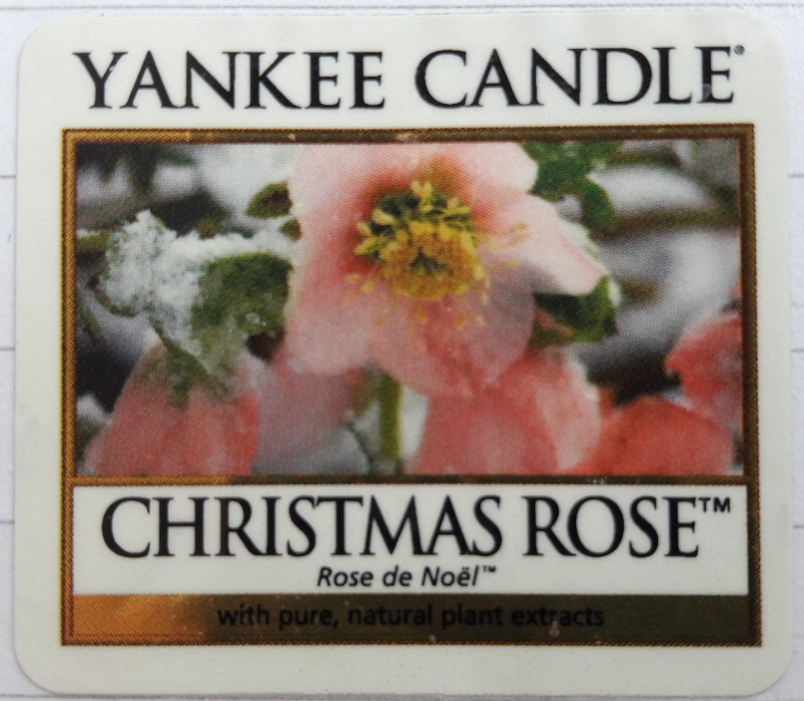 Pineapple Candles: Yankee Candle.Christmas Rose