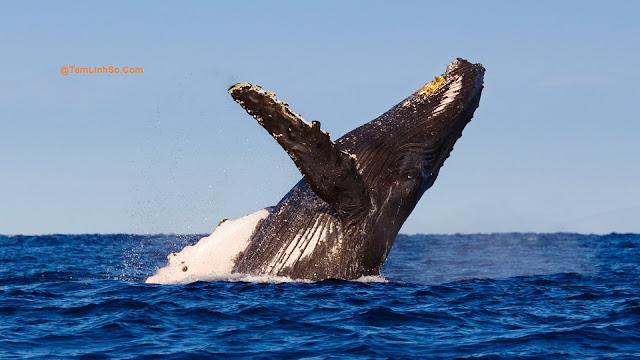 Bạn mơ thấy Cá voi và không biết Cá voi là số mấy?