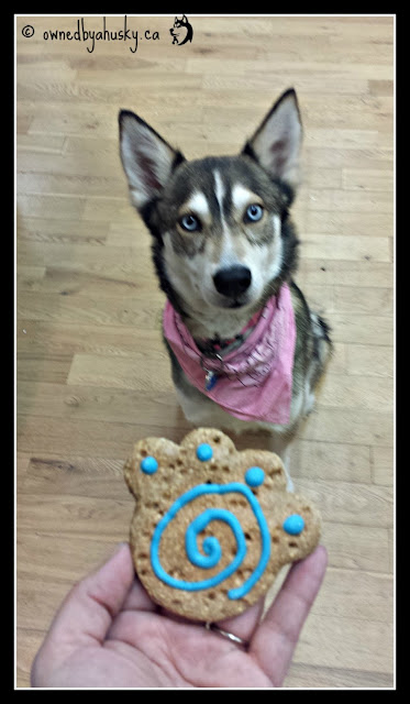 The Inner Working Dog - #StoreDog Or #SledDog ?