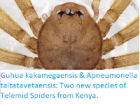 http://sciencythoughts.blogspot.co.uk/2018/01/guhua-kakamegaensis-apneumonella.html