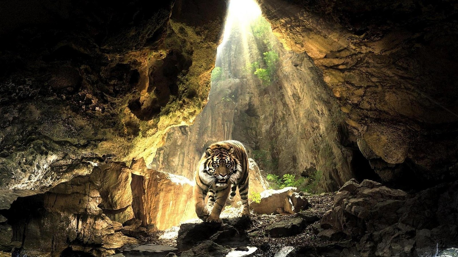 123Walls | Download High Quality Wallpapers: Wild Animal Stock Photography