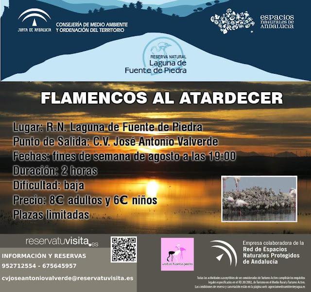 Flamencos al atardecer en la Laguna de Fuente de Piedra