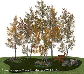 Autumn Aspen Trees Landscape