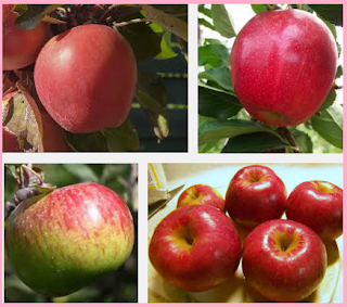 Kandungan zat gizi dan manfaat super dari buah apel sebagai obat berbagai macam penyakit.