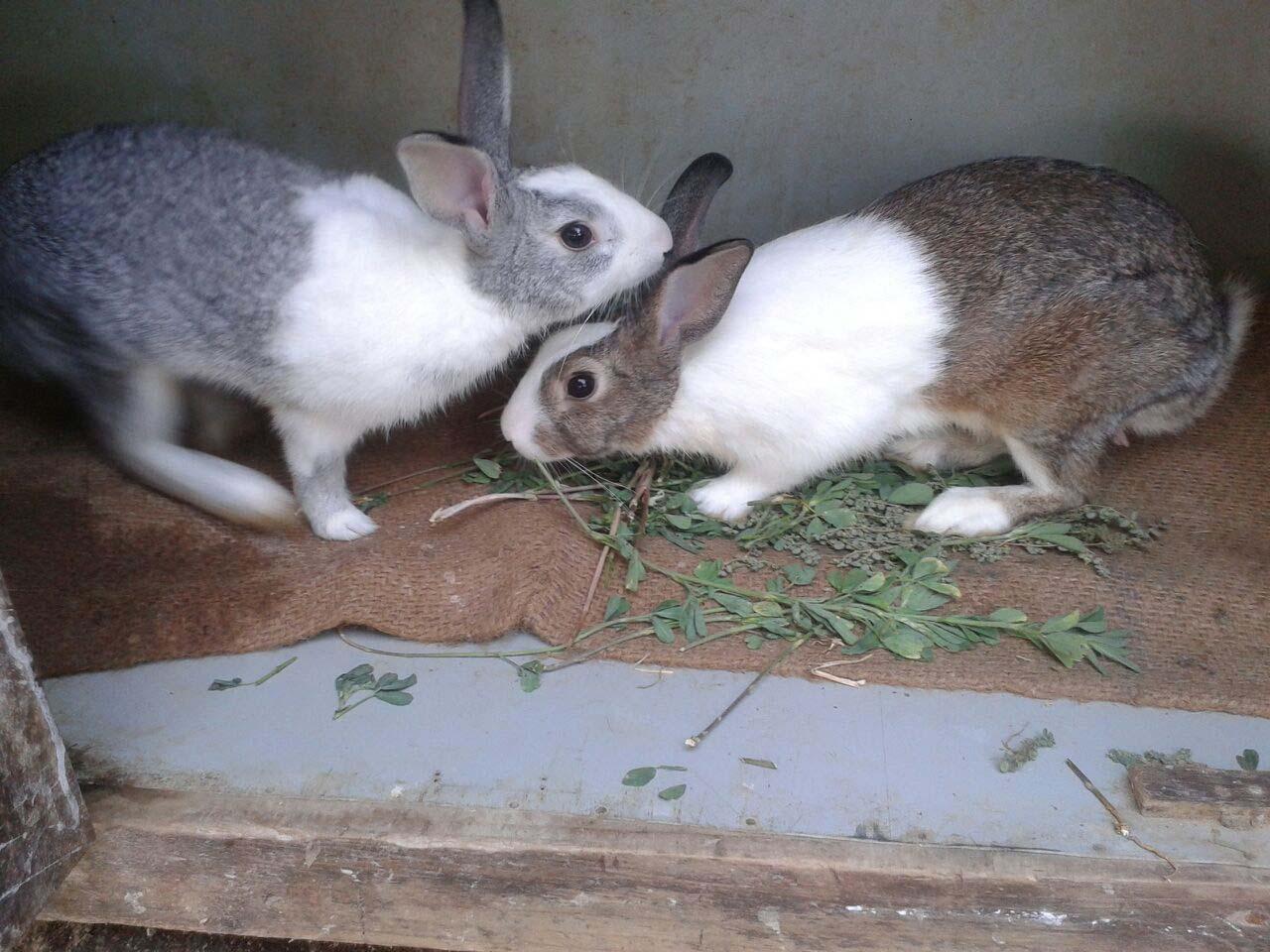 Cute White Rabbit Wallpapers For Desktop Lovely Cute Awesome Rabbit Images Love Images Of Love