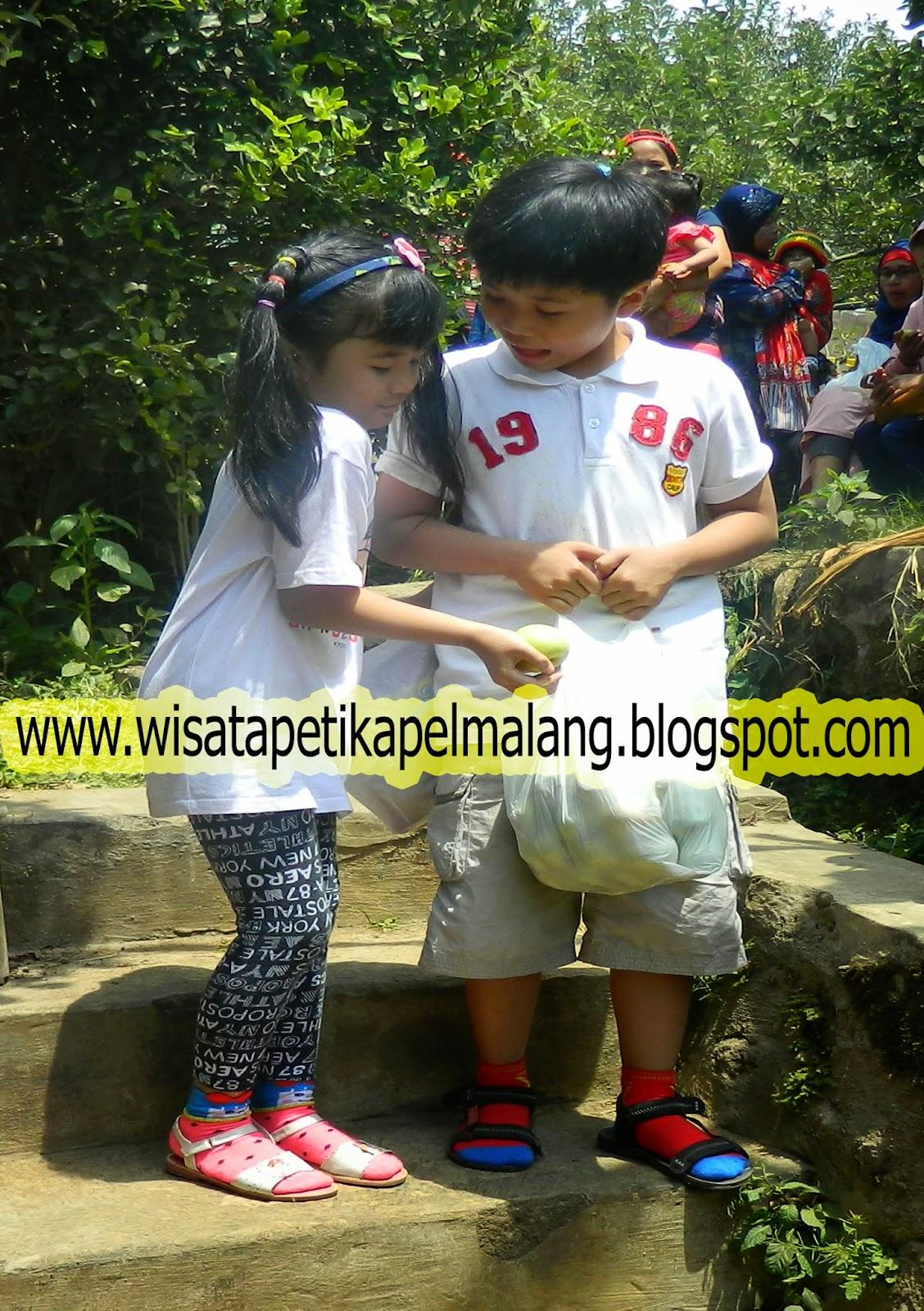 petik apel batu, www.wisatapetikapelmalang.blogspot.com, 082231080521