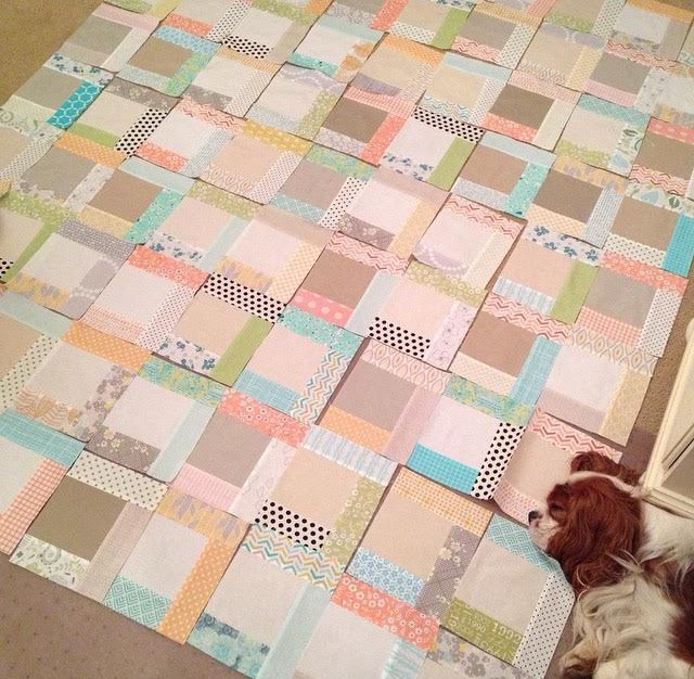 Blenheim Cavalier King Charles Spaniel napping on quilt in progress