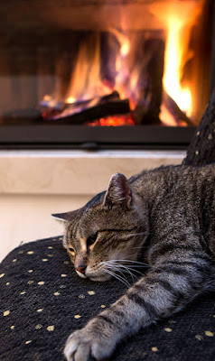 Stock photo of gray tabby cat lying near a fireplace