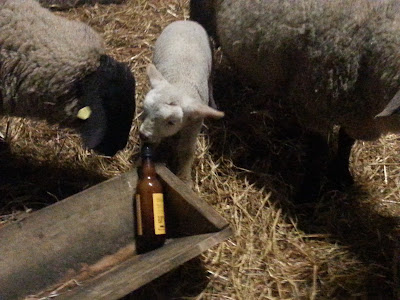 Raising Orphan And Bottle-fed Lambs