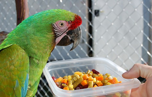 How to Feed the Parrot Bird