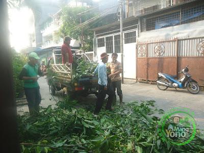 Pembuangan sampah daun dan kayu dipisah....