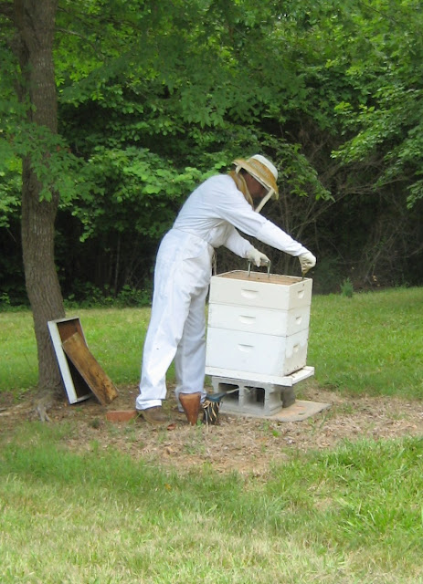 Robbing a bee hive photo