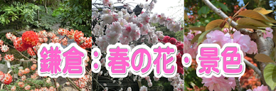 鎌倉:春の花
