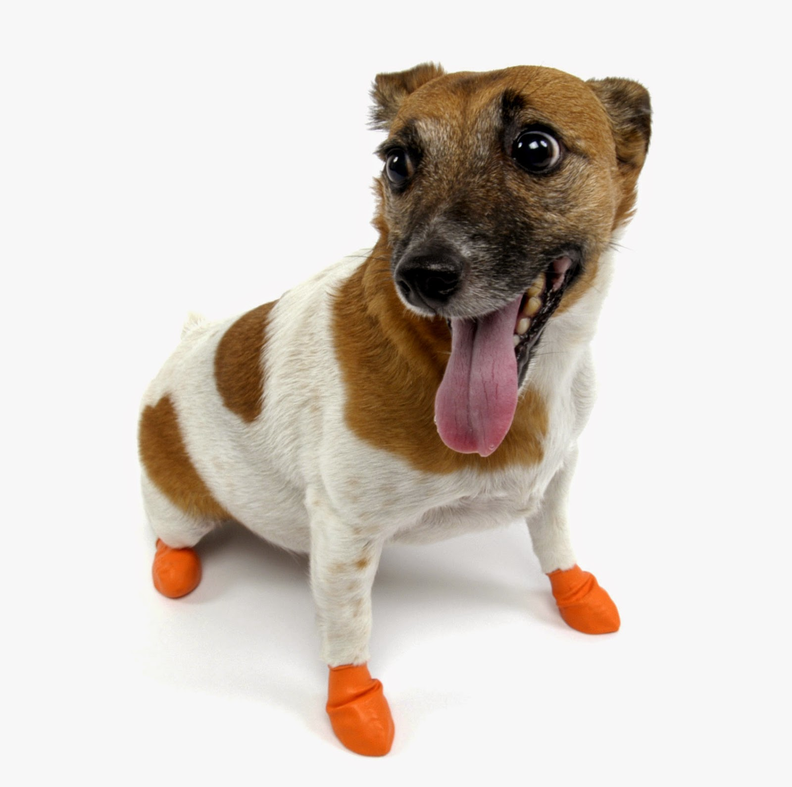 4 Ways to Protect Your Dog s Paws from Hot Concrete  69b479ee32e1