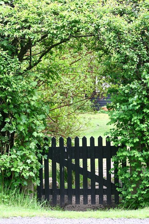 Garden therapy home garden design ideas for Cj garden designs