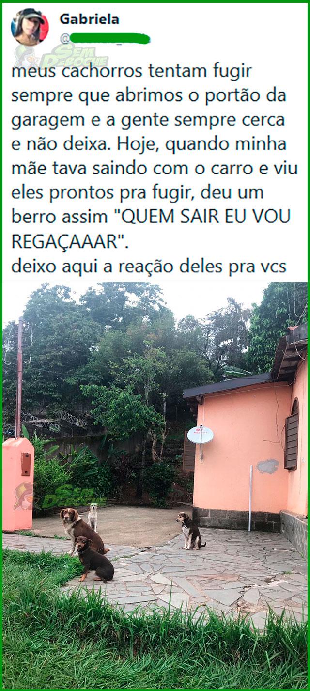 TODO MUNDO TEM MEDO DO BERRO DE UMA MÃE