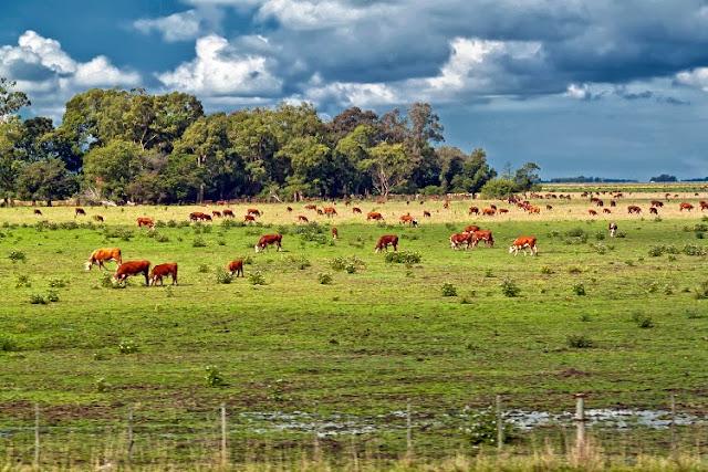 Paisaje campestre con vacas y nubes