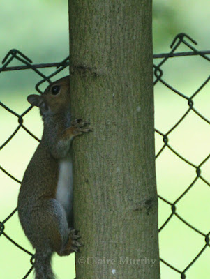 The Wildlife Trusts' Nature Challenge : 30 Days Wild : Scale Great Heights : Squirrel : Kent Surrey Sussex