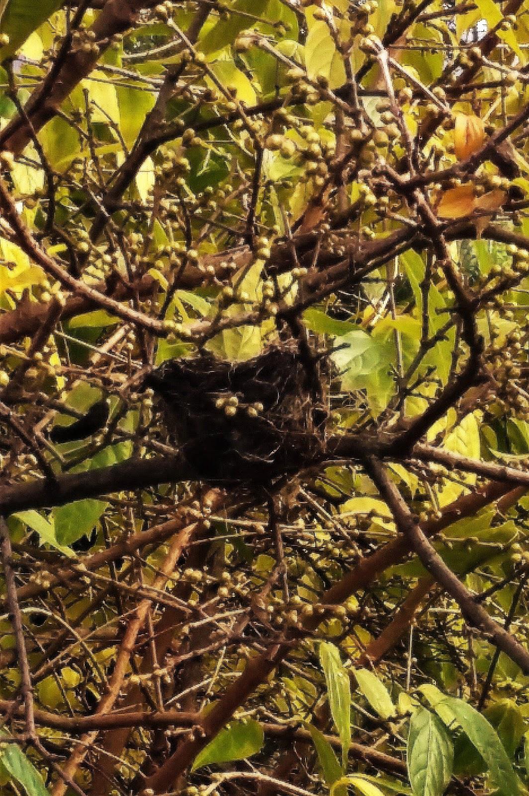 Calicanto Fiore D Inverno la leggenda del calicanto d'inverno