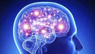 10 Makanan Super Untuk Meningkatkan Otak