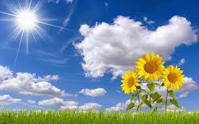 http://rajaramuan.blogspot.com/2016/02/manfaat-bunga-matahari-untuk-kesehatan.html