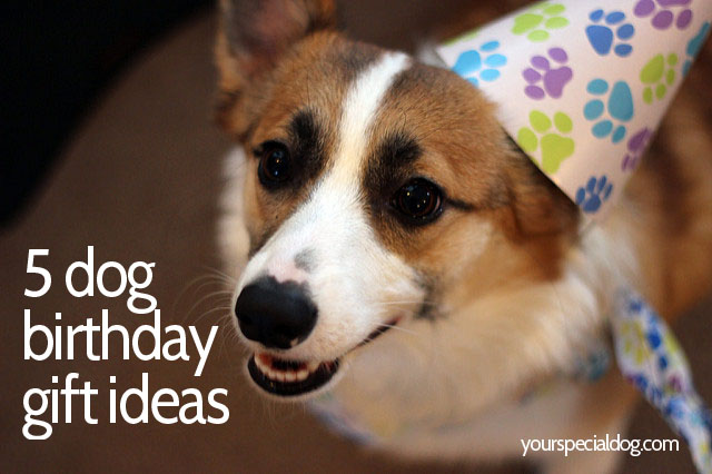 So Some Birthday Gift Ideas For Your Dog Might Be