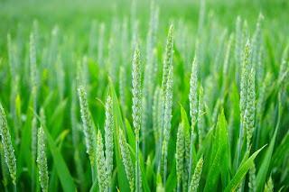 agrikultur dan contohnya