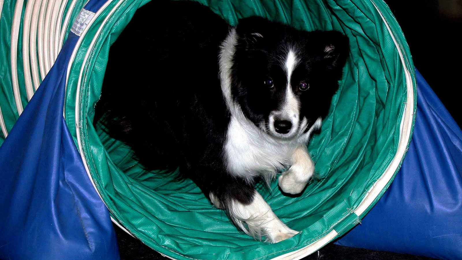 Truckee Meadows Dog Training Club