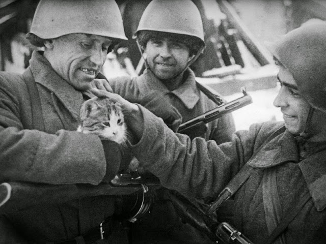 cats worldwartwo.filminspector.com
