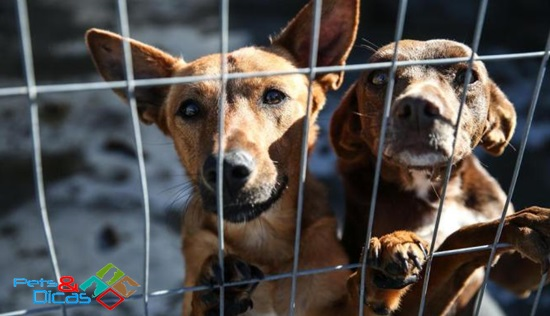 Multa de R$ 4 mil passa a valer para quem maltratar ou abandonar animais