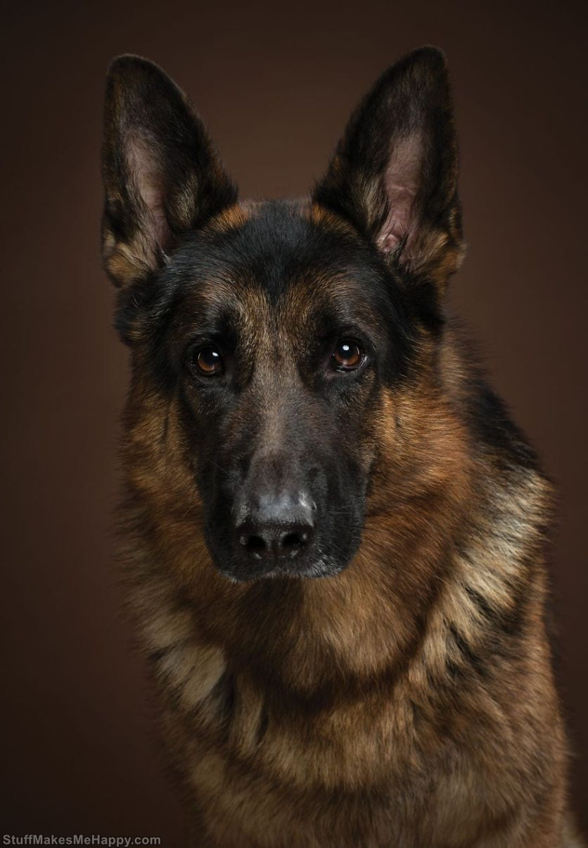 11. Tiger - this is the name of this German shepherd