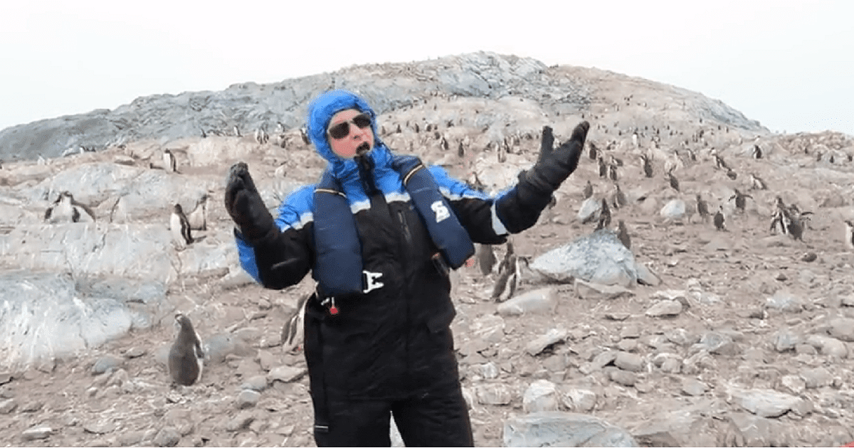 Do Penguins Enjoy Opera This Hilarious Video, Captured In Antarctica Has The Answer