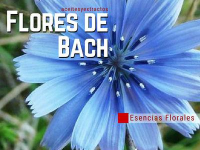 Flores de Bach, lista de las 39 Esencias Florales para subsanar trastornos de la Salud