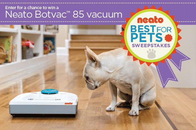 To Dog With Love You Deserve A Neato Robot Vacuum