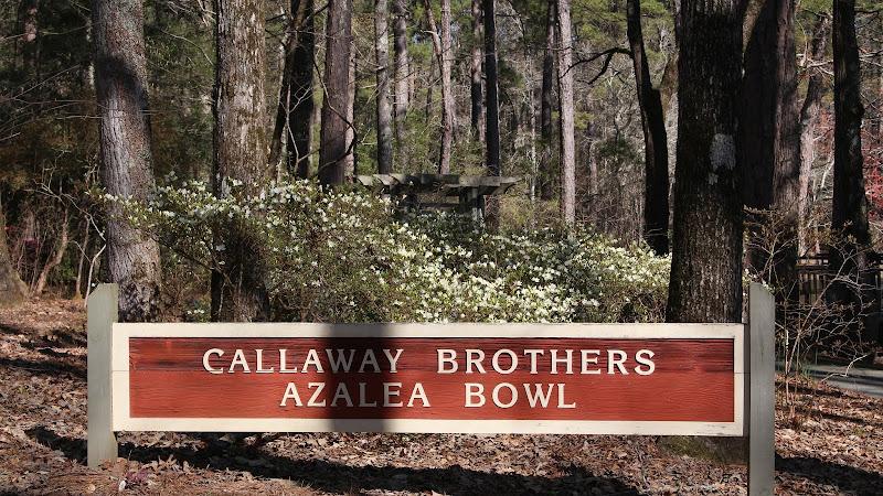 Azaleas at Callaway