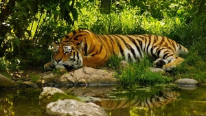 wallpapers jungle animals