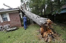 pohon tumbang memutus kabel indihome