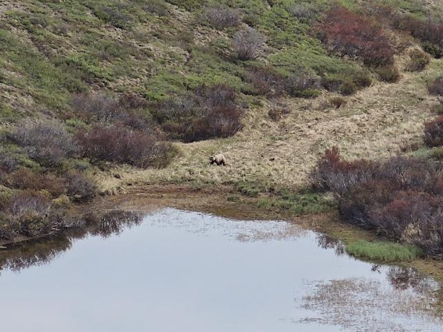 Denali national park 7